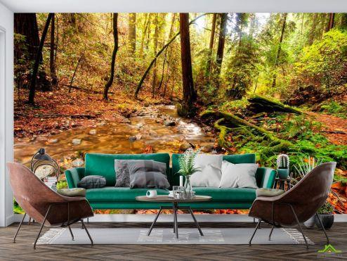 Природа Фотообои Ручей в лесу
