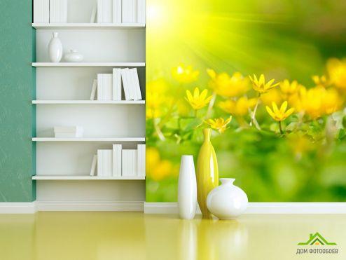 Подснежники Фотообои Пролиски желтые