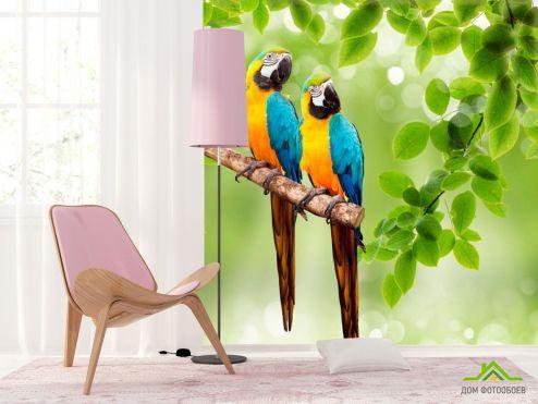обои Животные Фотообои Попугаи