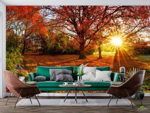 Фотообои Природа по выгодной цене Фотообои красные опавшие листья