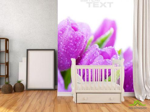 обои Цветы Фотообои Тюльпаны сиреневых тонов