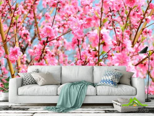 обои Розовые деревья Фотообои Кипарис розовый