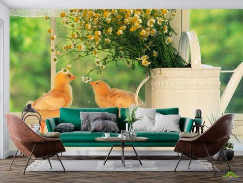 Животные Фотообои Два цыпленка