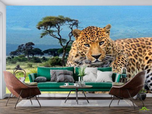 Животные Фотообои Гепард перед прыжком