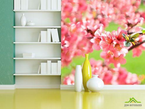 Вишня Фотообои Вишня цветущая весной