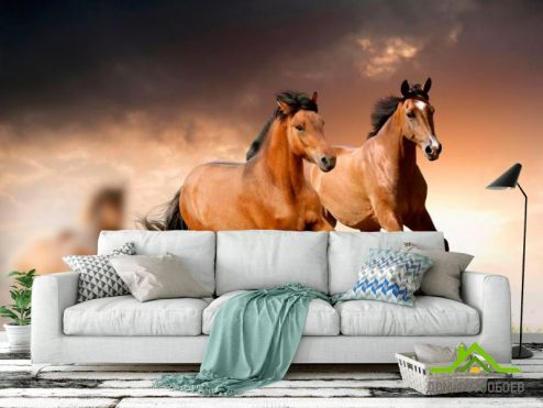 обои Лошади Фотообои Два мустанга