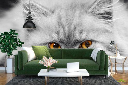 Коты Фотообои Серый котенок
