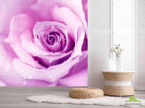 обои Цветы Фотообои Роза