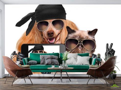 Животные Фотообои кот с собакой делают селфи
