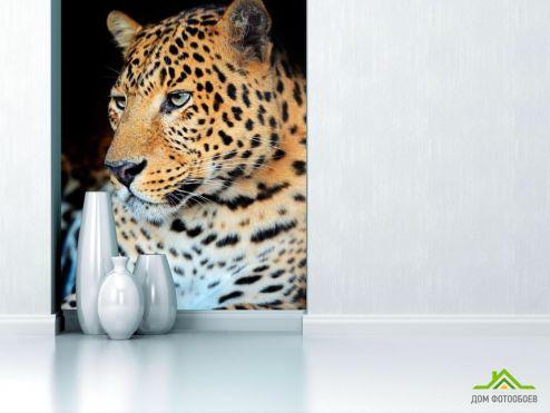 обои Гепарды Фотообои Ленивый гепард