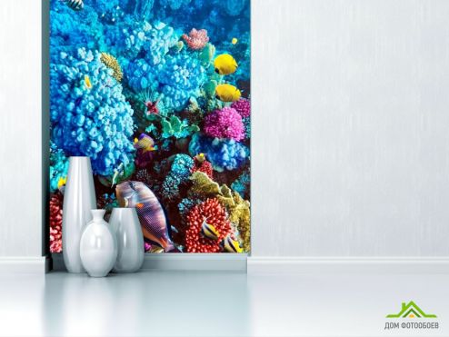 обои Рыбы и море Фотообои Голубые кораллы