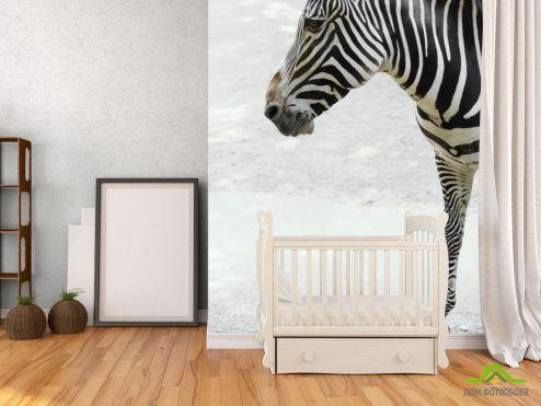 обои Зебры Фотообои Задумчивая зебра