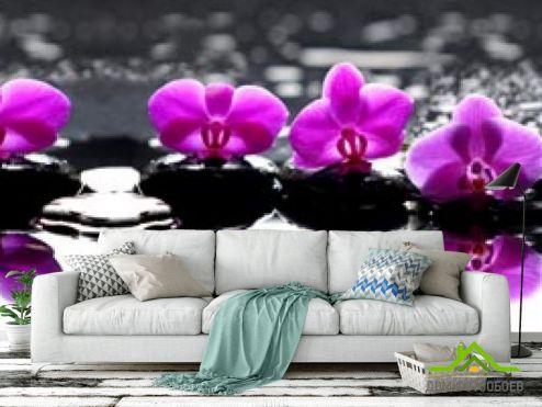 Орхидеи Фотообои фиолетовые орхидеи на камнях