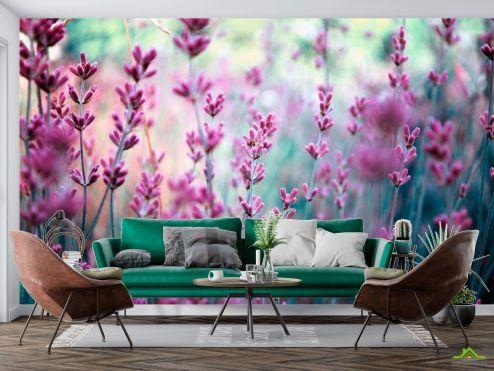 Цветы Фотообои Лаванда полевая купить