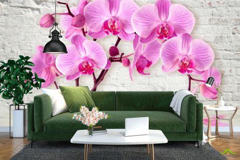 Фиолетовые  Фотообои 3д орхидея