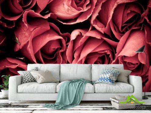 обои Розы Фотообои Красные розы