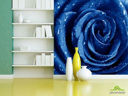 обои Розы Фотообои синяя роза с каплями