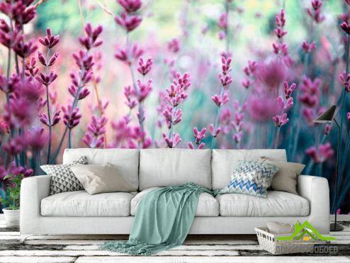 Фиолетовые обои Фотообои Лаванда полевая