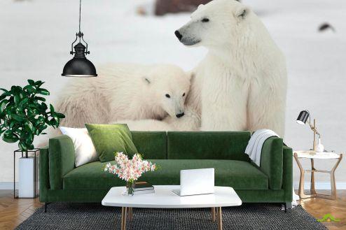 Медведи Фотообои Семья белых медведей