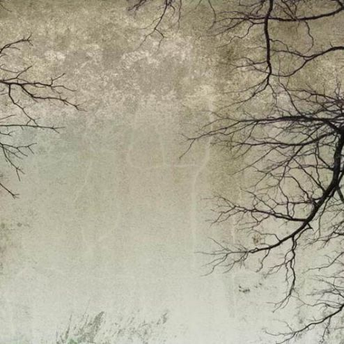 обои на потолок  Фотообои Ветви на потолке