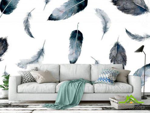 обои перья Фотообои Перья воздушные