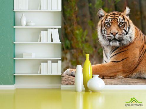 Тигры Фотообои Настороженный тигр
