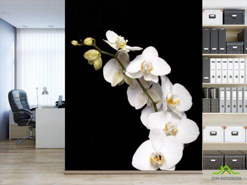 Орхидеи Фотообои веточка белой орхидеи на черном фоне