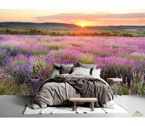 Фотообои Лавандовое поле на закате
