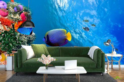 Рыбы и море Фотообои У кромки воды