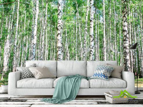 лес Фотообои Лес, березы