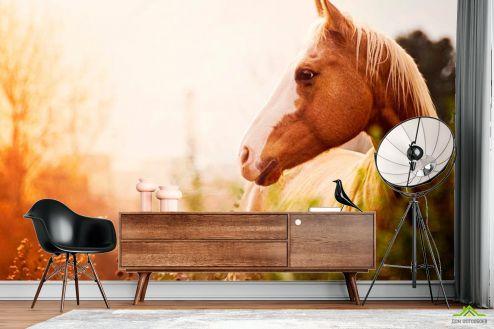 Лошади Фотообои Лошадь среди трав