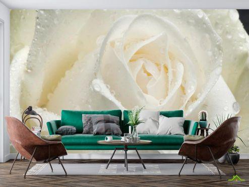 Цветы Фотообои Роза белая крупным планом купить