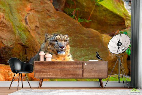 Гепарды Фотообои Гепард на скалах
