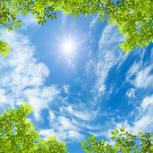 обои на потолок Фотообои Ветви и небо потолок