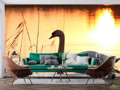 Птицы  Фотообои Одинокий лебедь