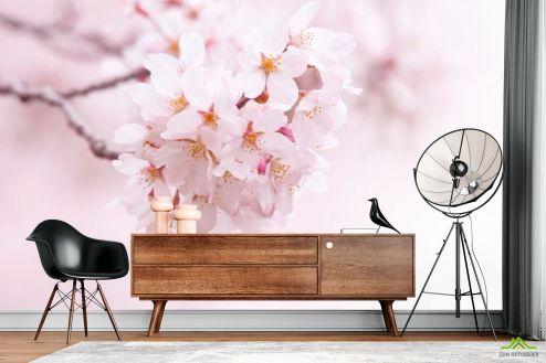 Абрикос Фотообои Цветущий весной абрикос