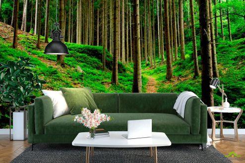 лес Фотообои Тропинки, ёлки