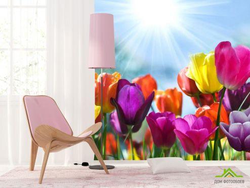 Тюльпаны Фотообои Разноцветные тюльпаны