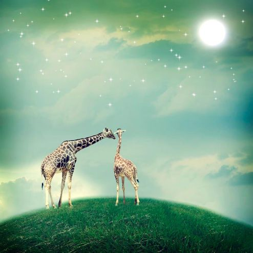в детскую Фотообои 2 влюбленных жирафа