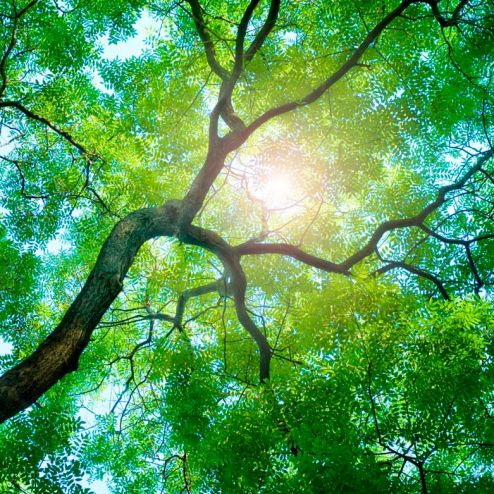 обои на потолок Фотообои Дерево, солнце