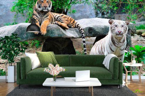 Тигры Фотообои Любознательные тигры