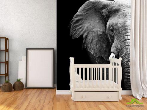 обои Слоны Фотообои Слон в темноте