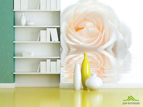 обои Цветы Фотообои Бело-кремовая роза