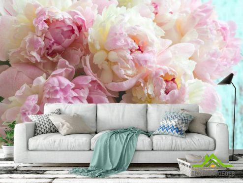 Пионы Фотообои Пионы розовые
