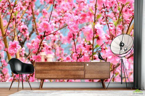 Розовые деревья Фотообои Кипарис розовый