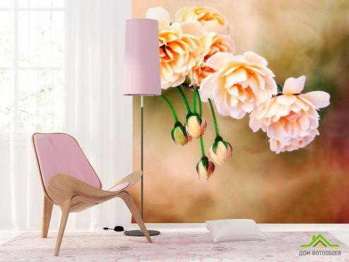 обои Цветы Фотообои Пионы бежевые