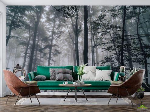 Природа Фотообои Тёмный лес