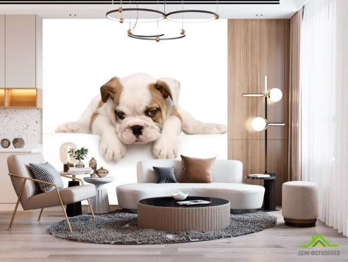 Собаки Фотообои Щенок