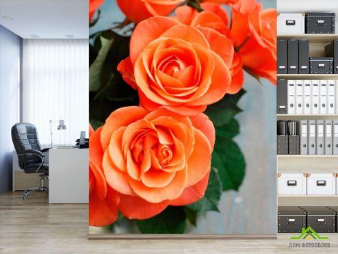 обои Цветы Фотообои Розы цвета кораллов