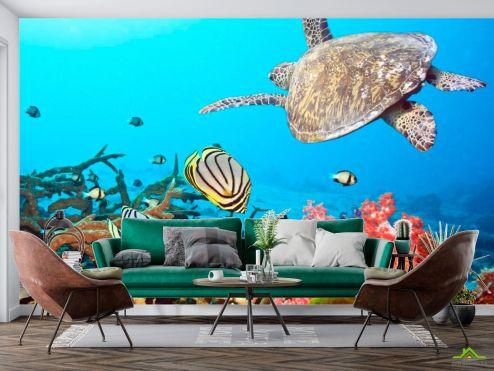 Рыбы и море Фотообои Черепашка и рыбки